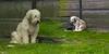 Majikan Meninggal 5 Tahun Lalu, Anjing ini Masih Setia Menunggu