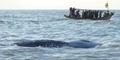 Foto Paus Seberat 2 Ton Terdampar di Pantai Karawang