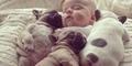 Imut dan Lucu, Pose Bayi Tidur Bersama Anjing Bulldog