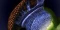Indahnya Mikro Organisme Dibawah Mikroskop