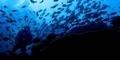 Keindahan Bawah Laut 'Raja Ampat'
