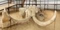 Kuburan Gajah Purba Raksasa