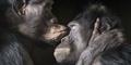Potret Ekpresi Emosi Hewan - Hewan Seperti Manusia