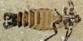 Fosil Kutu Dinosaurus Ditemukan di Mongolia