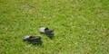 7 Tips merawat Sepatu Kulit Saat Musim Hujan