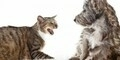 Bagaimana Berkonfrontasi dengan Teman Tanpa Jadi Menyebalkan