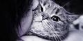 Pelihara Kucing Buat Karir dan Cinta Jadi Lancar!