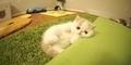 Bun Bun, Tingkah Lucu Anak Kucing saat Disorot Kamera