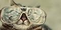 Ingin Ganti Gaya? Coba 8 Kacamata Unik ini Yuk!