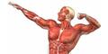 6 Organ Manusia Yang Sering Dijual