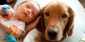 Anjing Mampu Tingkatkan Harapan Hidup Penderita Jantung