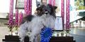 Ini Dia Pemenang Kontes Anjing Terjelek di Dunia