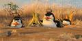 Para Penguin jadi Agen Rahasia di Trailer Lucu Penguins of Madagascar
