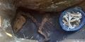 Ditemukan Fosil Dinosaurus di Bantul