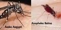 Inilah Perbedaan Demam Berdarah dan Malaria