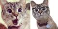 Nala, Kucing Menggemaskan Punya 1,3 Juta Followers Instagram