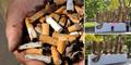 Kota Sydney Sulap Sampah Puntung Rokok jadi Karya Seni Unik