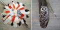 Lukisan Cantik di Kanvas Bulu Burung Karya Jamie Homeister