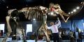 Rumah Lelang Inggris Jual Fosil Mammoth Rp 4,9 miliar