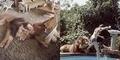 Aktris AS Tippi Hedren Pelihara Singa di Rumah