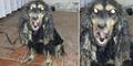 Anjing Jadi-Jadian Ditangkap di Saudi