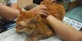 Kucing Ini Mampu Menenangkan Pasien di Klinik China