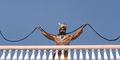 Ram Singh, Pria India Pemilik Kumis Terpanjang di Dunia 5,4 Meter!