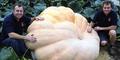 Labu Terbesar di Dunia 1,6 Ton Dipanen di Inggris