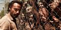 The Walking Dead Season 5 Tayang 13 Oktober di FOX Channel