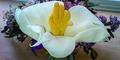 Bunga Ajaib 'Tangan Tuhan' Hebohkan Inggris