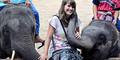 Gajah 'Horny' Culik Turis Wanita di Thailand