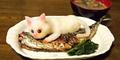 Kucing Lucu jadi Makanan di Jepang