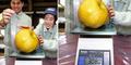 Jepang Panen Buah Pir Terbesar di Dunia, Seberat 3 Kg