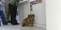 Masha, Anjing ini Setia Menunggu Majikannya yang Meninggal 2 Tahun Lalu