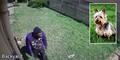 Video Kocak Aksi Maling Digagalkan Anjing Imut