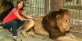Bius Singa Untuk Berselfie, Kebun Binatang Argentina Terancam Ditutup