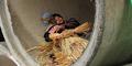 Istri Hamburkan Gaji Rp 20 Juta, Pria China Tidur di Pipa