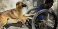 Kisah Kesetiaan Anjing Terhadap Majikannya Yang Lumpuh