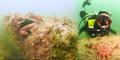Hutan Bawah Laut Berumur 10.000 Tahun Ditemukan di Inggris