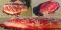 Makhluk Laut Misterius Ditemukan di Pantai Australia