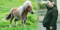 Pria Inggris Diadili Usai Setubuhi Kuda Poni di Hutan