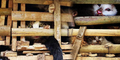 Ribuan Kucing Sebanyak 3 Ton Nyaris Dimasak di Vietnam