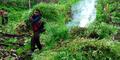 Lagi, Ladang Ganja 1 Hektare Siap Panen Ditemukan di Aceh