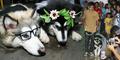 Pesta Pernikahan Anjing di Manado Jadi Sorotan Dunia