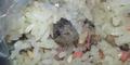 Ibu di Tiongkok Paksa Anak Sarapan Tikus Rebus