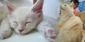 Imutnya Kucing Jumbo Bernama Toro