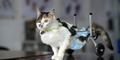 Jatuh dari Lantai 9, Kucing di China Pakai Kaki Roda