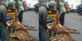 Kuda Hamil Dipaksa Narik Andong Melahirkan di Jalanan Yogyakarta