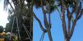 Angker, Pohon Kelapa Bercabang di Bali Sering Bikin Kesurupan