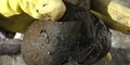 Arkeolog Polandia Temukan Dildo Berusia 300 tahun